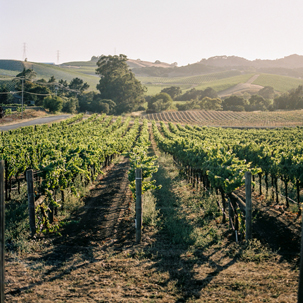 A Cherry California Road Trip 2015: Napa Valley